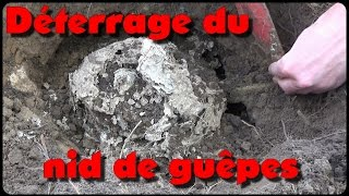 Download Déterrage du nid de guêpes Video