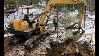 Download Clearing trees for a new driveway Video