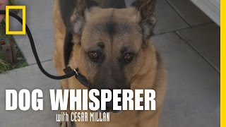 Download Learning the Leash | Dog Whisperer Video