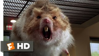 Download Nutty Professor 2: The Klumps (8/9) Movie CLIP - Giant Hamster Attack (2000) HD Video
