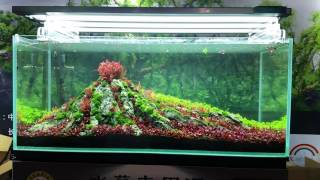 Download Aquascaping Master - CIPS 2016 - China Video