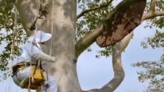Download Giant honey bees - Life in the Undergrowth - BBC Attenborough Video