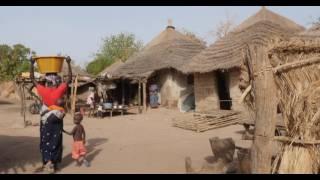 Download 赋权于冈比亚森林社区 Video