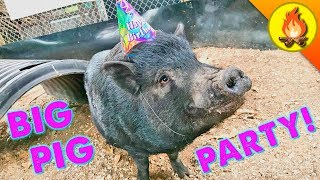 Download BIG PIG PARTY! Video