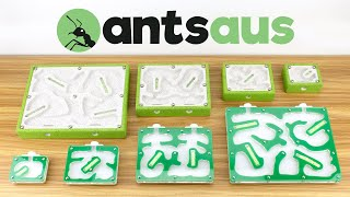 Download Ants Australia Shop - Now Open! Video