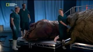 Download Проект Динозавр!!!! ОЧЕНЬ ИНТЕРЕСНО!!! Video