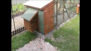 Download Mon poulailler (8 poules pondeuses : 7 à 8 oeufs par jours !) Video