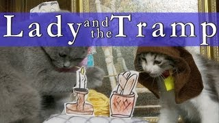 Download Walt Disney's Lady and the Tramp (Cute Kitten Version) Video