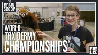 Download I waited 4+ years for this: the World Taxidermy Championships! Video