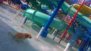 Download Dog Poops in a Water Park (Super Pooper Sunday #37) Video