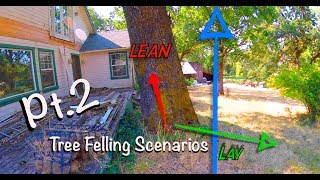 Download Tree Felling Scenarios Pt.2 Video