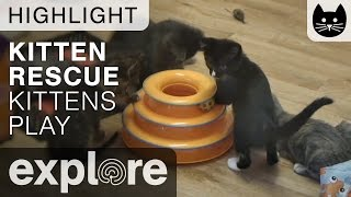 Download Kitties Playing with Ball Toy - Live Cam Highlight Video