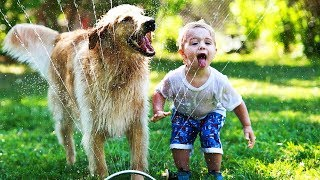 Download Funny Dogs 🐶 Dogs Playing With Water (FULL) [Funny Pets] Video