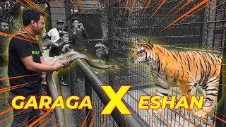 Download PERTEMU4N MEN3GANGKAN..!! GARAGA KING COBRA X ESHAN HARIMAU BENGGALA..! Video