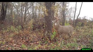 Download Proven Hunting Tips for Using Deer Scents Video