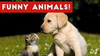 Download Funniest Animal Reactions, Bloopers & Moments November 2016 Weekly Compilation | Funny Pet Videos Video