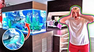 Download MY NEW BEDROOM SHARK TANK!! **500 GALLONS** Video