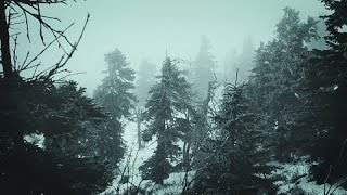 Download ❄️ Snowstorm Blizzard Wind Sounds For Sleeping, Relaxing ~ Calm Snow Arctic Howling Winter Ambience Video