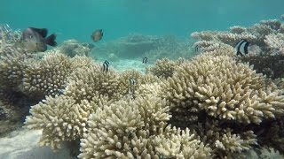 Download Mauritius' coral reef faces double environmental threat Video