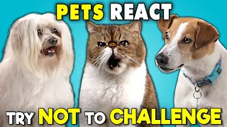 Download Pets React To The Try Not To Ultimate Challenge (Laugh, Move, Eat) Video