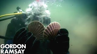 Download Hand-Diving for Scallops - Gordon Ramsay Video