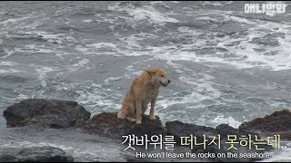 Download Why this stray dog stays on the rocky shore despite the crashing waves.. Video
