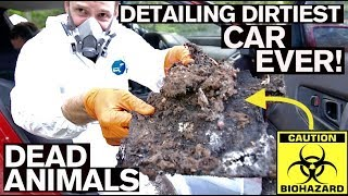 Download BIOHAZARD Detailing Dirtiest Car Ever! First Wash in 10 Years Video