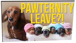 Download Companies Are Offering Pet Maternity Leave?! ft. Shannon Boodram & DavidSoComedy Video
