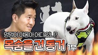 Download [Eng sub] 함께 사는 개와 고양이를 공격하는 불 테리어 구락이 1부|내 강아지의 공격성 Video