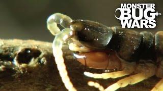 Download Desert Centipede Vs Trapdoor Spider | MONSTER BUG WARS Video