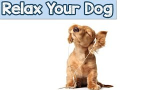 Download Relaxation Music to Help your new dog or puppy, with travelling or car journeys stress Video
