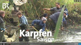 Download Karpfen aus dem Aischgrund | Zwischen Spessart und Karwendel | BR Video