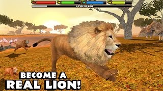 Download 🦁👍ULTIMATE ♌️LION SIMULATOR - By Gluten Free Games - Compatible with iPhone, iPad, and iPod touch. Video