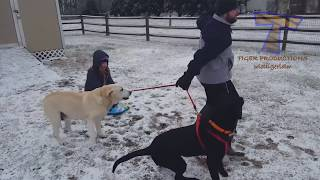 Download FUNNIEST DOGS in SNOW COMPILATION - Haven't seen better yet! Enjoy watching and LAUGH with us! Video
