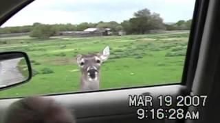 Download Deer at Petting Zoo Scares Kid Video