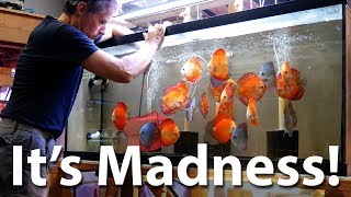 Download Discus Showroom Tour - Discus Madness, Inc. Video