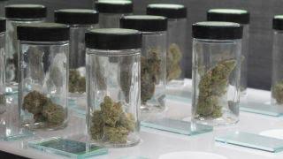 Download Struggling towns turn to medical marijuana Video