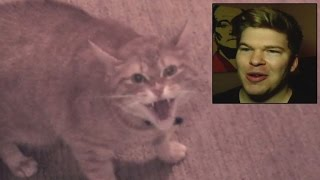 Download Watch Man Get Held Hostage By Shrieking Angry Cat Video
