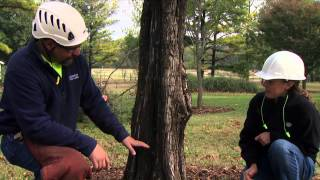 Download How to Safely Notch a Tree for Direct Felling Video