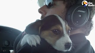 Download Pilots Help Dogs Find Forever Homes   The Dodo Video