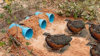 Download Awesome Quick Bird Trap Using Deep Hole With PVC - Easy Best Bird Traps Work 100% Video