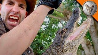 Download Alligator Bite DAMAGE! Video