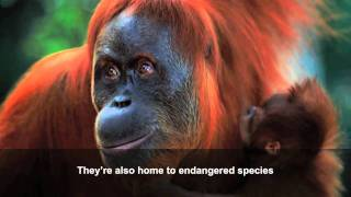 Download Palm oil: how our consumer choices affect wildlife Video