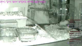 Download [모찌] National Hamster graphic (실시간 햄스터 방송) #16-11-24 Video