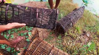Download National Fishing in country side - Catfishes & Mud fishing in Cambodia Tradition Use fishing trap Video