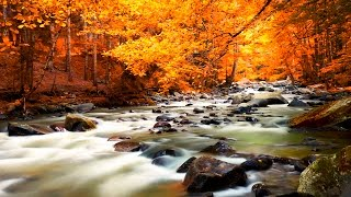 Download Relaxing Music - Nature Sounds - Autumn Forest HD Video