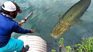 Download NEW Species caught on Rocket Fishing Rod!!! Help me Identify! Video