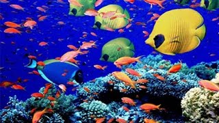Download Underwater Animals - Beautiful Fishes In Indian Ocean, Maldives - Snorkeling in Maldives Video