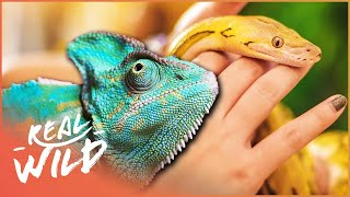 Download Meet The Wild Animals People Are Keeping As Pets! | Snakes In The City | Wild Things Documentary Video