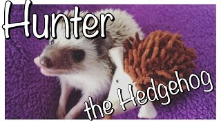 Download Things People Don't Tell You About Owning a Hedgehog Video